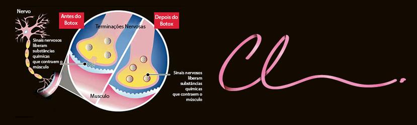 Mecanismo de Ação do Botox