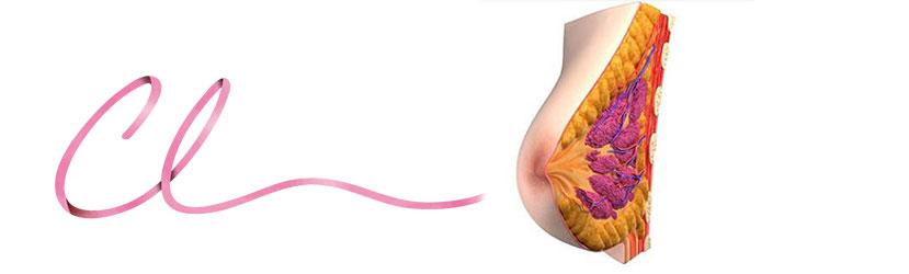 Ilustração da Anatomia das Estruturas de Sustentação da Mama