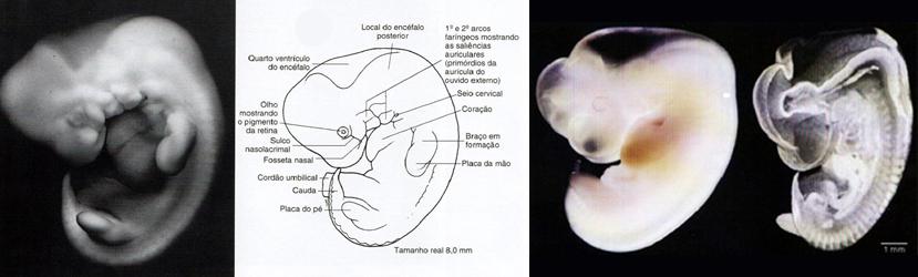 Erro na Fase Embrionária